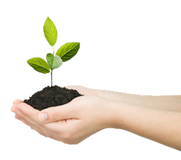 image of hands holding dirt wiht sprouting plant